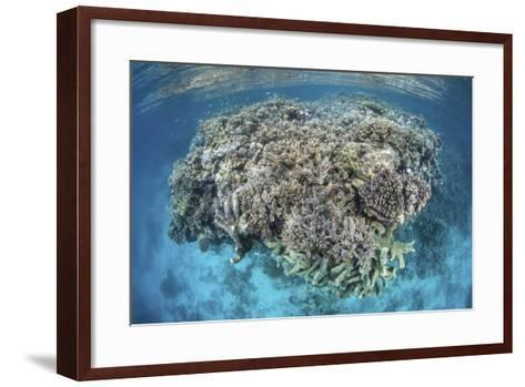 A Diverse Coral Reef Grows in Shallow Water in the Solomon Islands-Stocktrek Images-Framed Art Print