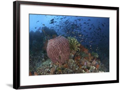 Bright Sponges, Soft Corals and Crinoids in a Colorful Komodo Seascape-Stocktrek Images-Framed Art Print