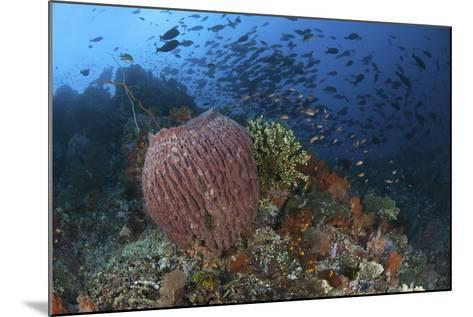 Bright Sponges, Soft Corals and Crinoids in a Colorful Komodo Seascape-Stocktrek Images-Mounted Photographic Print