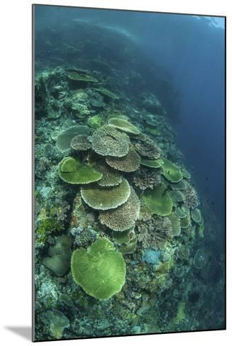 Healthy Reef-Building Corals Thrive in Komodo National Park, Indonesia-Stocktrek Images-Mounted Photographic Print