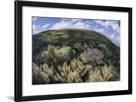 Gorgonians and Reef-Building Corals Near the Blue Hole in Belize-Stocktrek Images-Framed Art Print