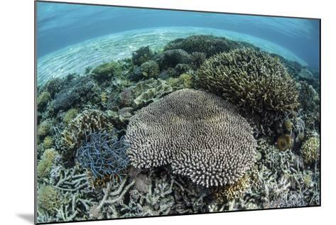 Reef-Building Corals Near Alor, Indonesia-Stocktrek Images-Mounted Photographic Print
