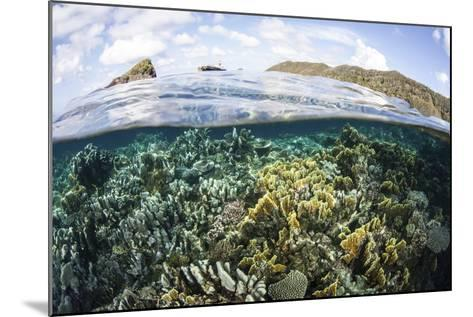 A Beautiful Coral Reef in Raja Ampat, Indonesia-Stocktrek Images-Mounted Photographic Print