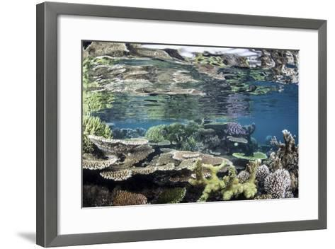 Reef-Building Corals in Raja Ampat, Indonesia-Stocktrek Images-Framed Art Print