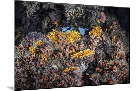 A Colorful Coral Reef Grows Along a Deep Dropoff in the Solomon Islands-Stocktrek Images-Mounted Photographic Print
