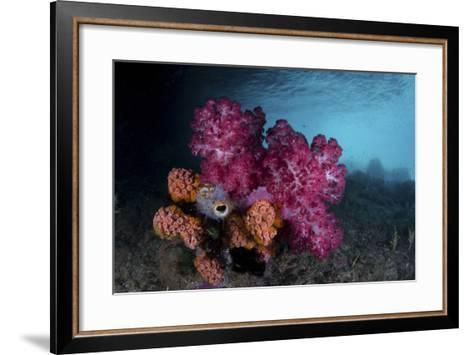 A Soft Coral Colony and Invertebrates in Raja Ampat, Indonesia-Stocktrek Images-Framed Art Print