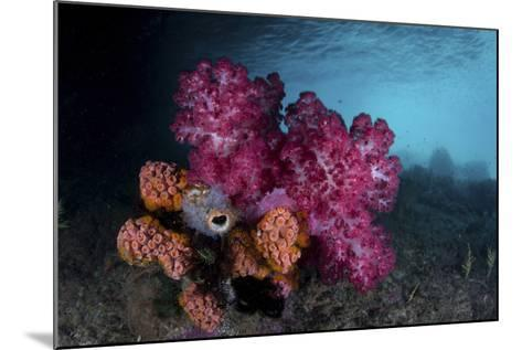 A Soft Coral Colony and Invertebrates in Raja Ampat, Indonesia-Stocktrek Images-Mounted Photographic Print