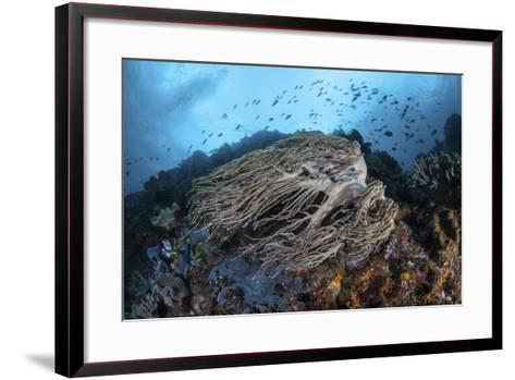 Strong Current Sweeps Along a Reef Slope in Indonesia-Stocktrek Images-Framed Art Print