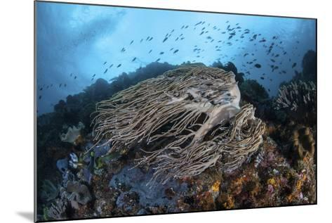 Strong Current Sweeps Along a Reef Slope in Indonesia-Stocktrek Images-Mounted Photographic Print