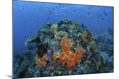 A Current Sweeps across a Colorful Coral Reef in Indonesia-Stocktrek Images-Mounted Photographic Print