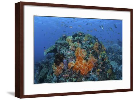 A Current Sweeps across a Colorful Coral Reef in Indonesia-Stocktrek Images-Framed Art Print