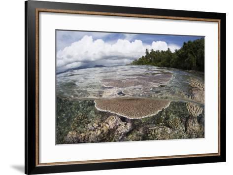 Reef-Building Corals Grow on a Reef in the Solomon Islands-Stocktrek Images-Framed Art Print