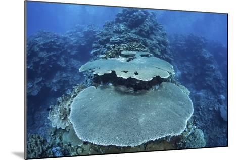 Reef-Building Corals Grow on a Reef in the Solomon Islands-Stocktrek Images-Mounted Photographic Print