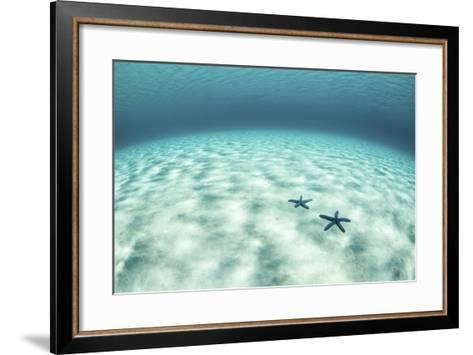 Starfish on a Brightly Lit Seafloor in the Tropical Pacific Ocean-Stocktrek Images-Framed Art Print
