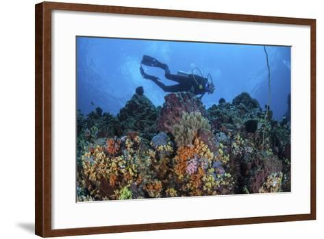 A Scuba Diver Swims Above a Colorful Coral Reef Near Sulawesi, Indonesia-Stocktrek Images-Framed Art Print