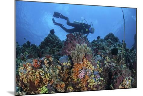 A Scuba Diver Swims Above a Colorful Coral Reef Near Sulawesi, Indonesia-Stocktrek Images-Mounted Photographic Print