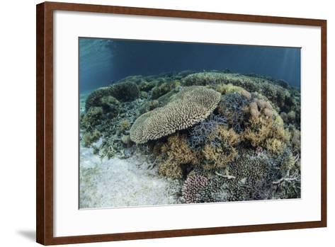 Reef-Building Corals Near Alor, Indonesia-Stocktrek Images-Framed Art Print