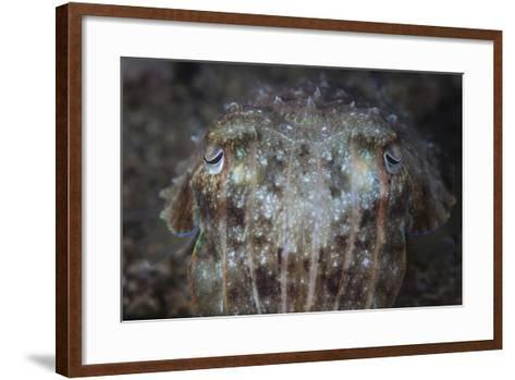 Close-Up Front View of a Broadclub Cuttlefish-Stocktrek Images-Framed Art Print