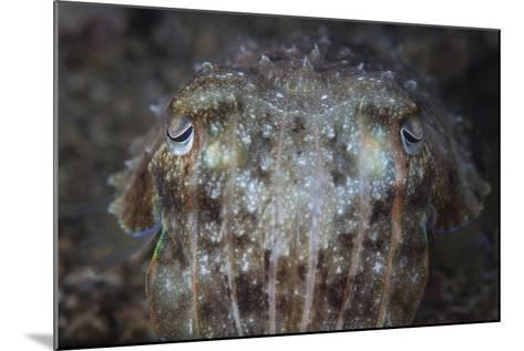 Close-Up Front View of a Broadclub Cuttlefish-Stocktrek Images-Mounted Photographic Print