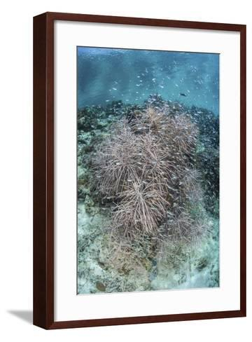 Juvenile Fish Swarm around a Coral Colony in Raja Ampat, Indonesia-Stocktrek Images-Framed Art Print