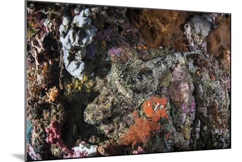 A Large Crocodilefish Lies on a Colorful Reef-Stocktrek Images-Mounted Photographic Print