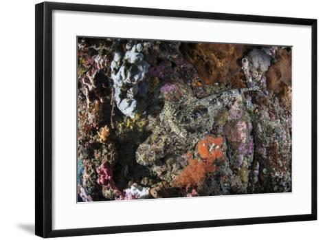 A Large Crocodilefish Lies on a Colorful Reef-Stocktrek Images-Framed Art Print