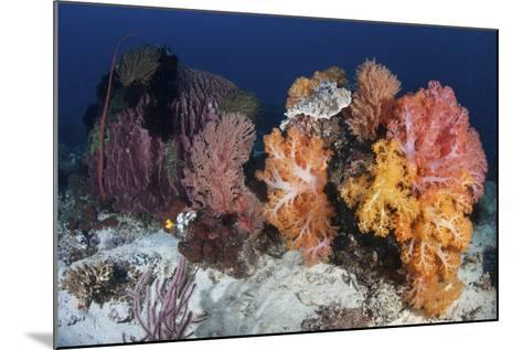 Soft Corals and Invertebrates on a Beautiful Reef in Indonesia-Stocktrek Images-Mounted Photographic Print