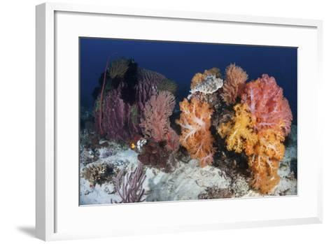 Soft Corals and Invertebrates on a Beautiful Reef in Indonesia-Stocktrek Images-Framed Art Print