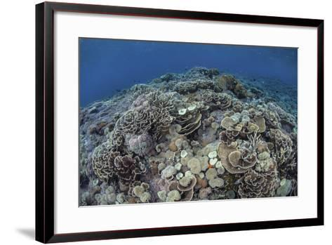 Corals Compete for Space to Grow on a Reef in Indonesia-Stocktrek Images-Framed Art Print