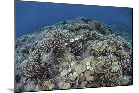 Corals Compete for Space to Grow on a Reef in Indonesia-Stocktrek Images-Mounted Photographic Print