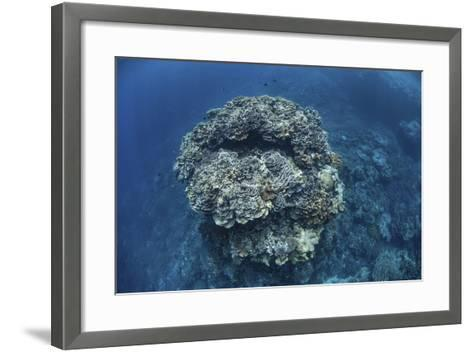 A Large Coral Bommie Grows on a Reef in the Solomon Islands-Stocktrek Images-Framed Art Print