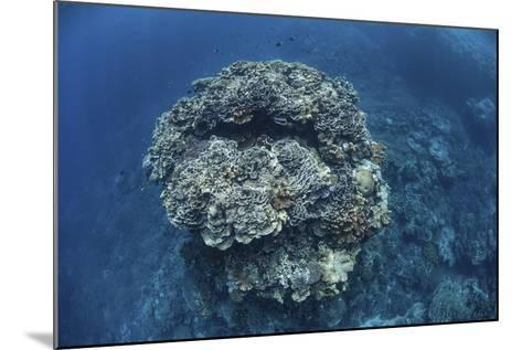 A Large Coral Bommie Grows on a Reef in the Solomon Islands-Stocktrek Images-Mounted Photographic Print