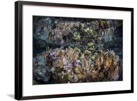 Colorful Reef-Building Corals Grow on a Reef in the Solomon Islands-Stocktrek Images-Framed Art Print