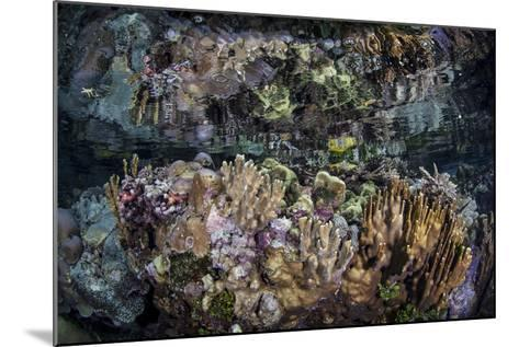 Colorful Reef-Building Corals Grow on a Reef in the Solomon Islands-Stocktrek Images-Mounted Photographic Print
