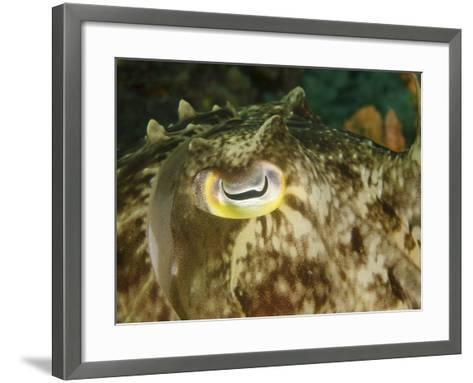 Close-Up of a Cuttlefish Eye, Manado, Indonesia-Stocktrek Images-Framed Art Print