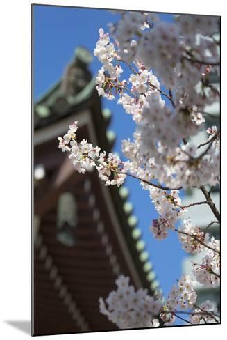 Cherry Blossom at Tocho-Ji Temple, Fukuoka, Kyushu, Japan-Ian Trower-Mounted Photographic Print