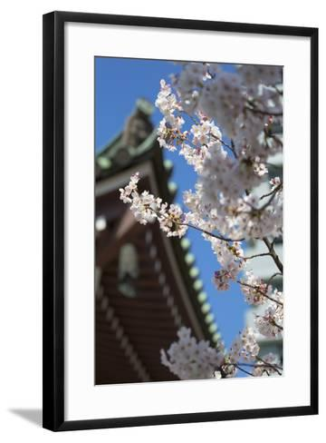 Cherry Blossom at Tocho-Ji Temple, Fukuoka, Kyushu, Japan-Ian Trower-Framed Art Print