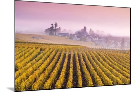 Misty Sunrise over Oger, Champagne Ardenne, France-Matteo Colombo-Mounted Photographic Print
