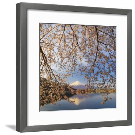 Japan, Yamanashi Prefecture, Kawaguchi-Ko Lake, Mt Fuji and Cherry Blossoms-Michele Falzone-Framed Art Print