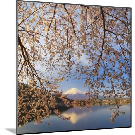 Japan, Yamanashi Prefecture, Kawaguchi-Ko Lake, Mt Fuji and Cherry Blossoms-Michele Falzone-Mounted Photographic Print