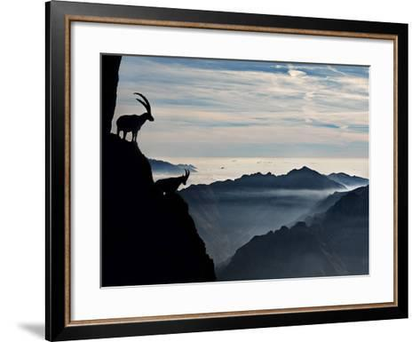 Two Alpine Ibex Dominate from Above the Spectacular View of the Italian Alps.-ClickAlps-Framed Art Print