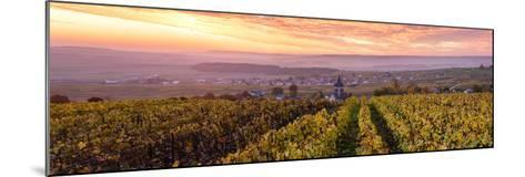Colorful Sunrise over the Vineyards of Ville Dommange, Champagne Ardenne, France-Matteo Colombo-Mounted Photographic Print