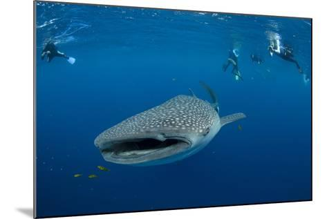 Whale Shark and People. Cenderawasih Bay, West Papua, Indonesia-Pete Oxford-Mounted Photographic Print