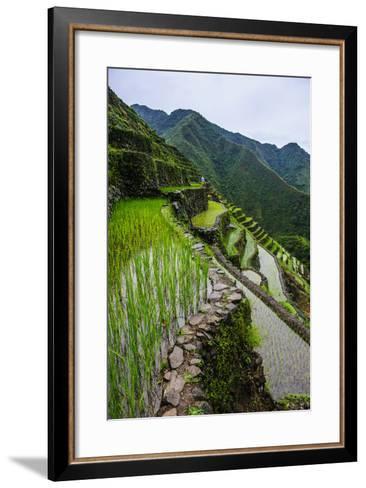 Batad Rice Terraces, World Heritage Site, Banaue, Luzon, Philippines-Michael Runkel-Framed Art Print