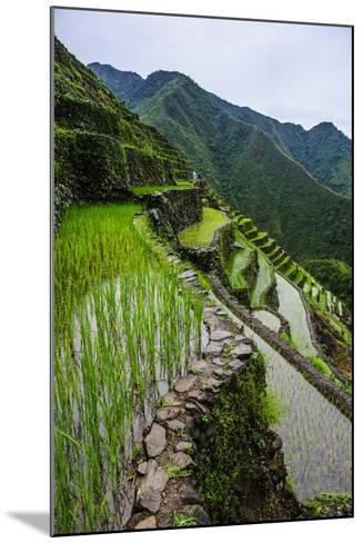 Batad Rice Terraces, World Heritage Site, Banaue, Luzon, Philippines-Michael Runkel-Mounted Photographic Print