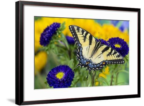 Eastern Tiger Swallowtail Butterfly-Darrell Gulin-Framed Art Print