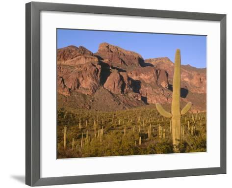 Arizona, Organ Pipe Cactus National Monument-John Barger-Framed Art Print