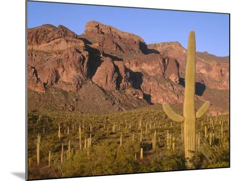 Arizona, Organ Pipe Cactus National Monument-John Barger-Mounted Photographic Print