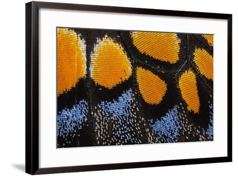 Close-Up Detail Wing Pattern of Butterfly-Darrell Gulin-Framed Art Print