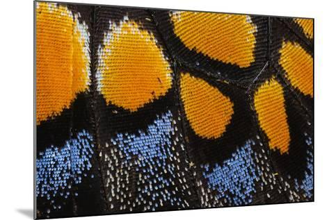 Close-Up Detail Wing Pattern of Butterfly-Darrell Gulin-Mounted Photographic Print